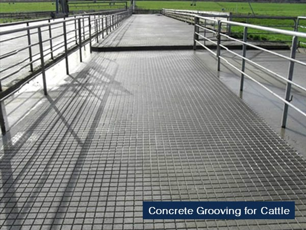 concrete grooving for cattle